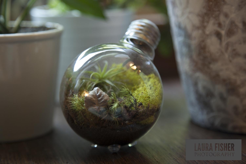 Light Bulb Terrariums