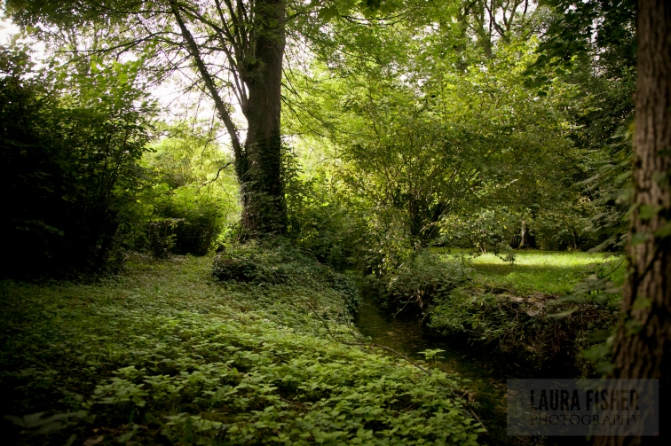 This is Françoise's backyard. Her grounds are AMAZING. Secret-Garden-esque, like many peoples' backyards in Noyers.
